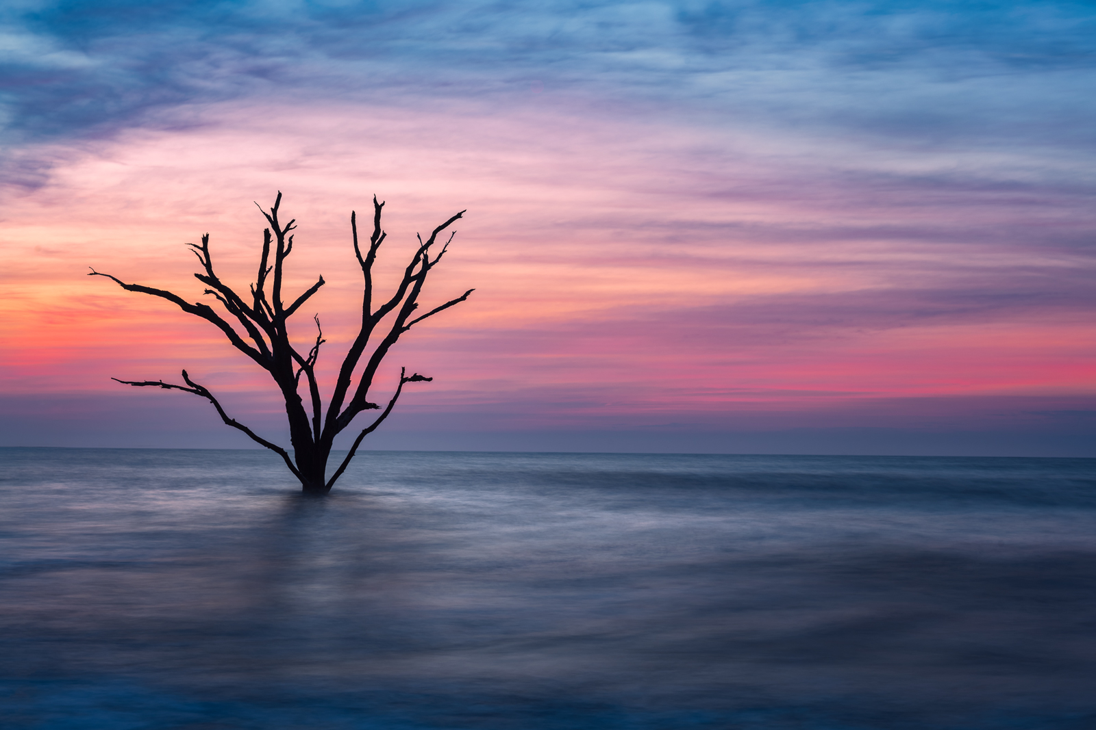 A lone Live Oak out in the rising tide of the Atlantic Ocean along the barrier island beach at Botany Bay.