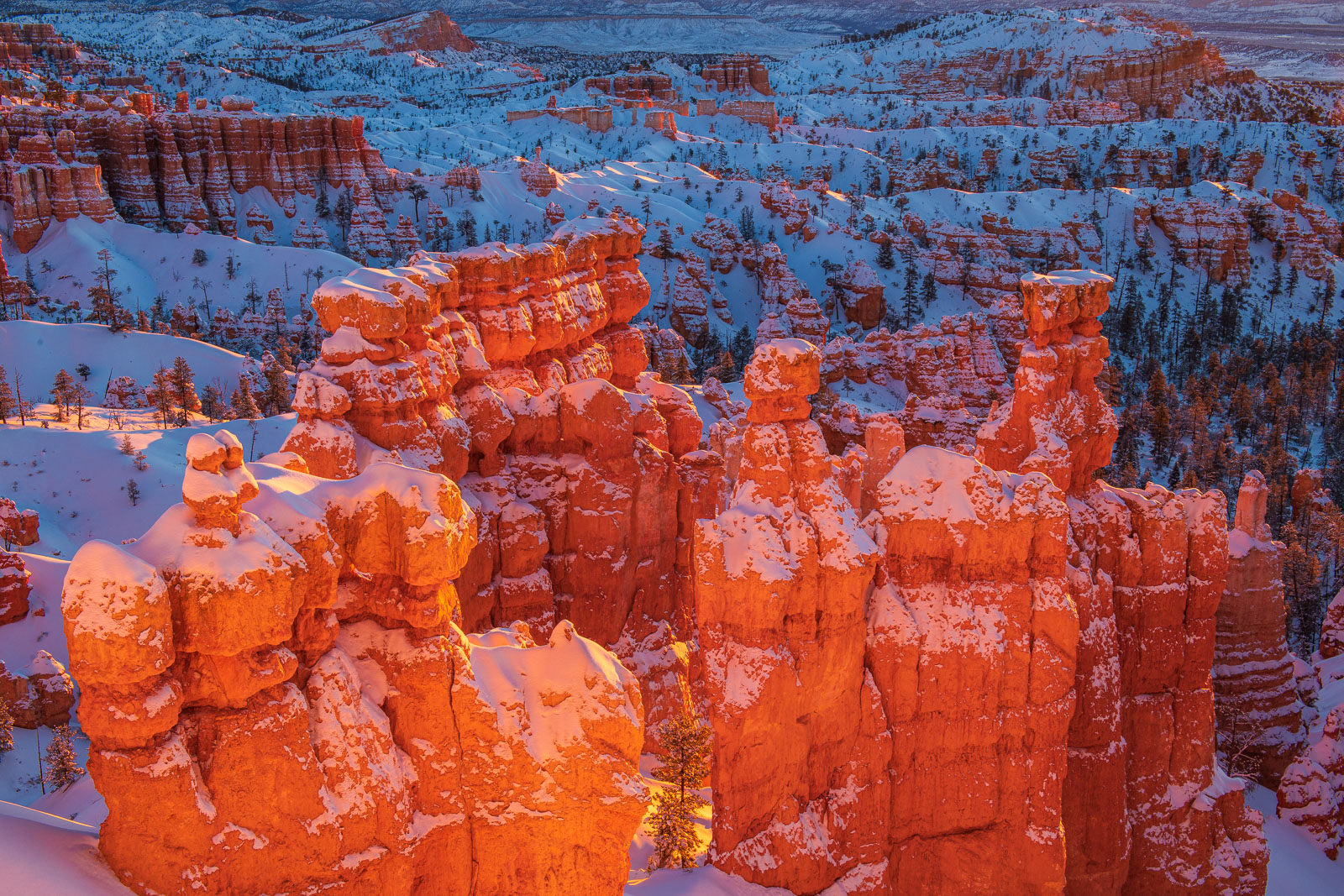 Glowing hoodos just after sunrise in Bryce Canyon National Park. Photographed after a heavy winter snowfall. Available Print...
