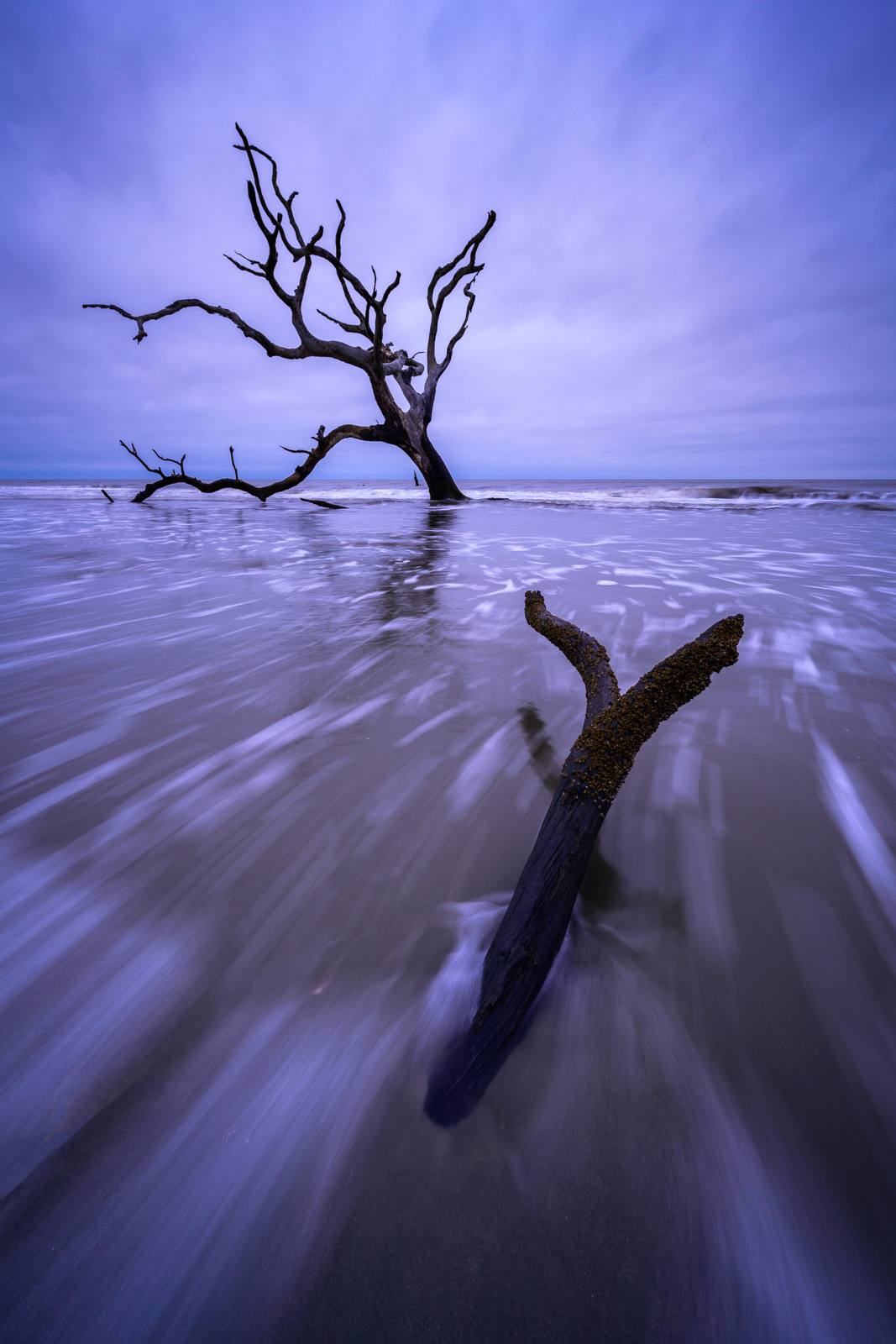 A live Oak stranded in the rising tides at twilight on this remote and uninhabited barrier island north of Charleston.