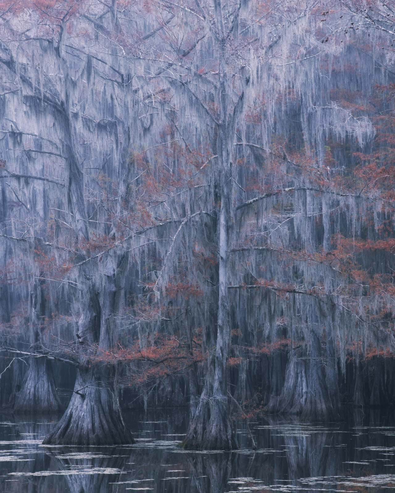 Foggy morning among the ghostly cypress on Caddo Lake.