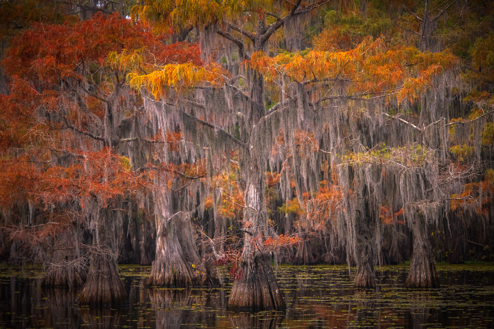 Limited Edition of 50 The bayou and swamps of Caddo Lake on the Texas and Louisiana border is one of the most hauntingly beautiful...
