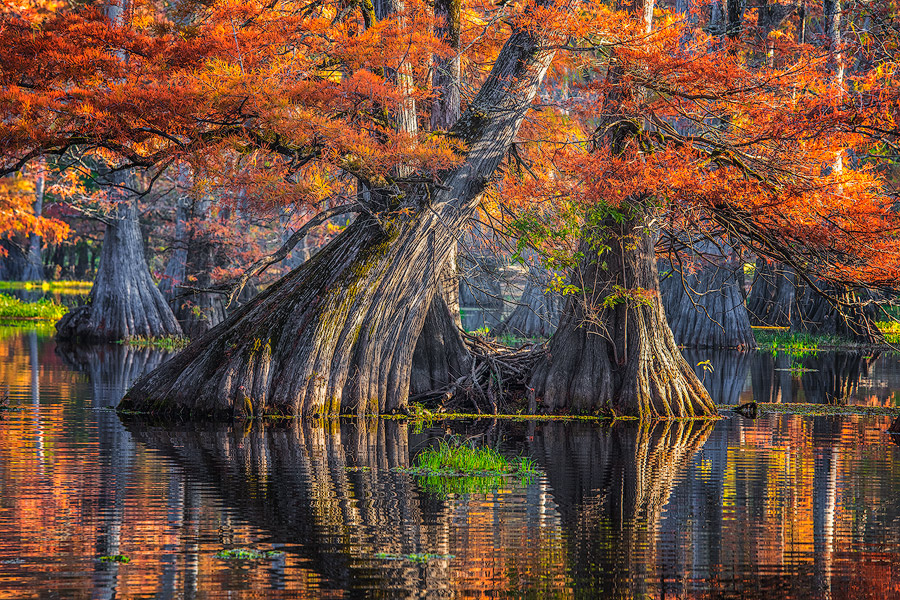 Cypress reflections in Caddo Lake.
