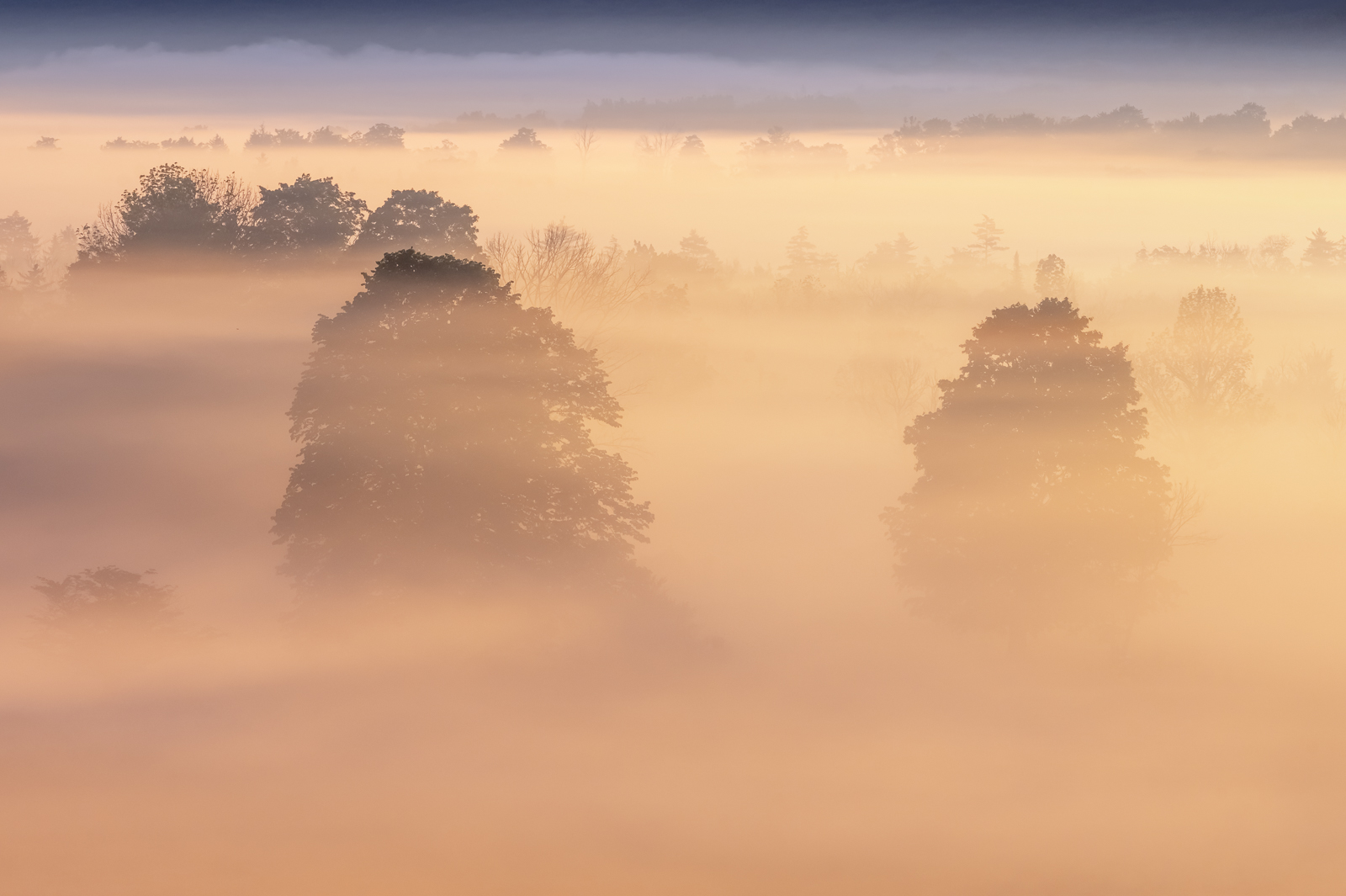 Morning ground fog and the rising sun paint this beautiful scene in Canaan Valley, West Virginia. Canaan Valley is the highest...
