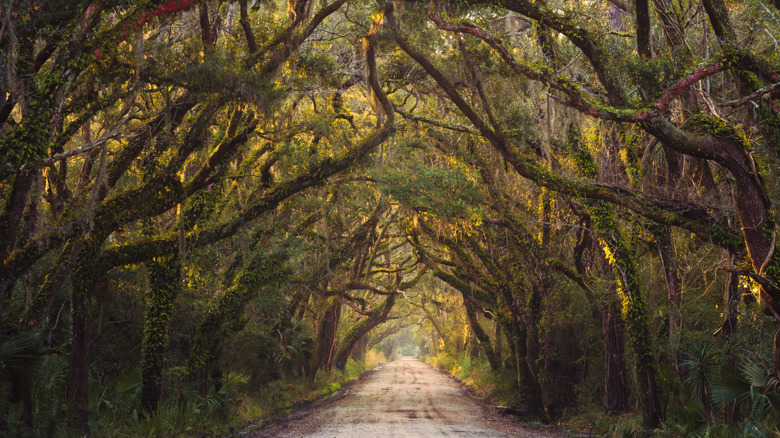 A tunnel of Live Oaks decorate this lane on Edisto Island south of Charleston.
