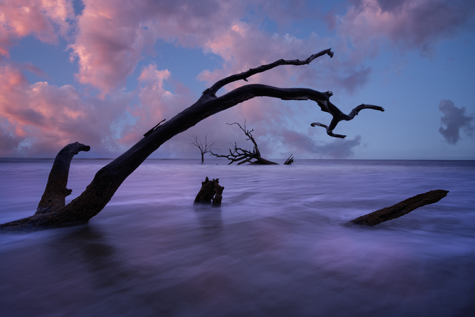 Live Oak tree's in the ocean at sunrise from Bulls Island, a barrier island north of Charleston.