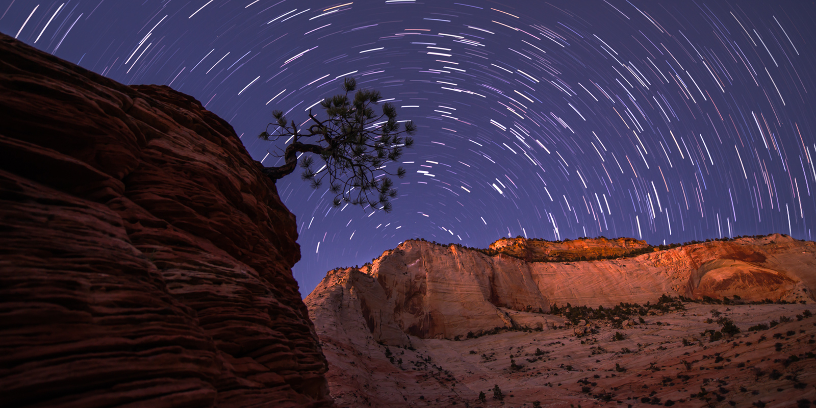 Startrails above a lone Pinyon Pine perched on a sandstone cliff in Zion National Park, Utah.