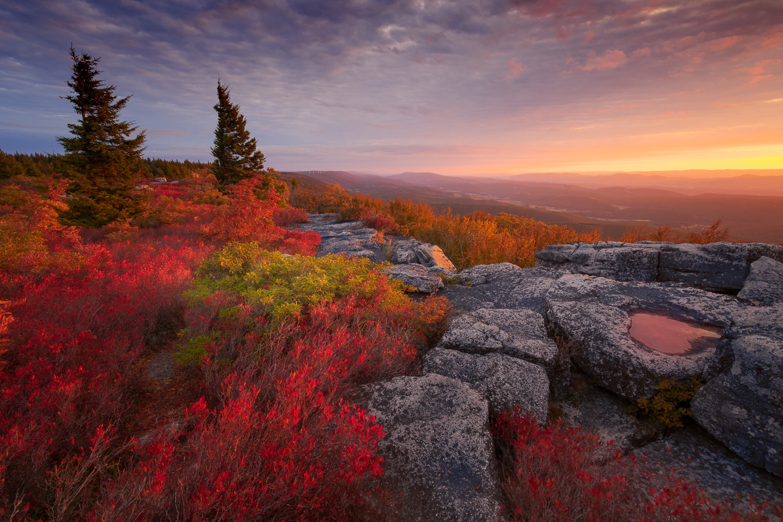 Time stands still high above Canaan Valley, in Dolly Sods, where a flat, windswept expanse of subalpine heath barrens opens up...
