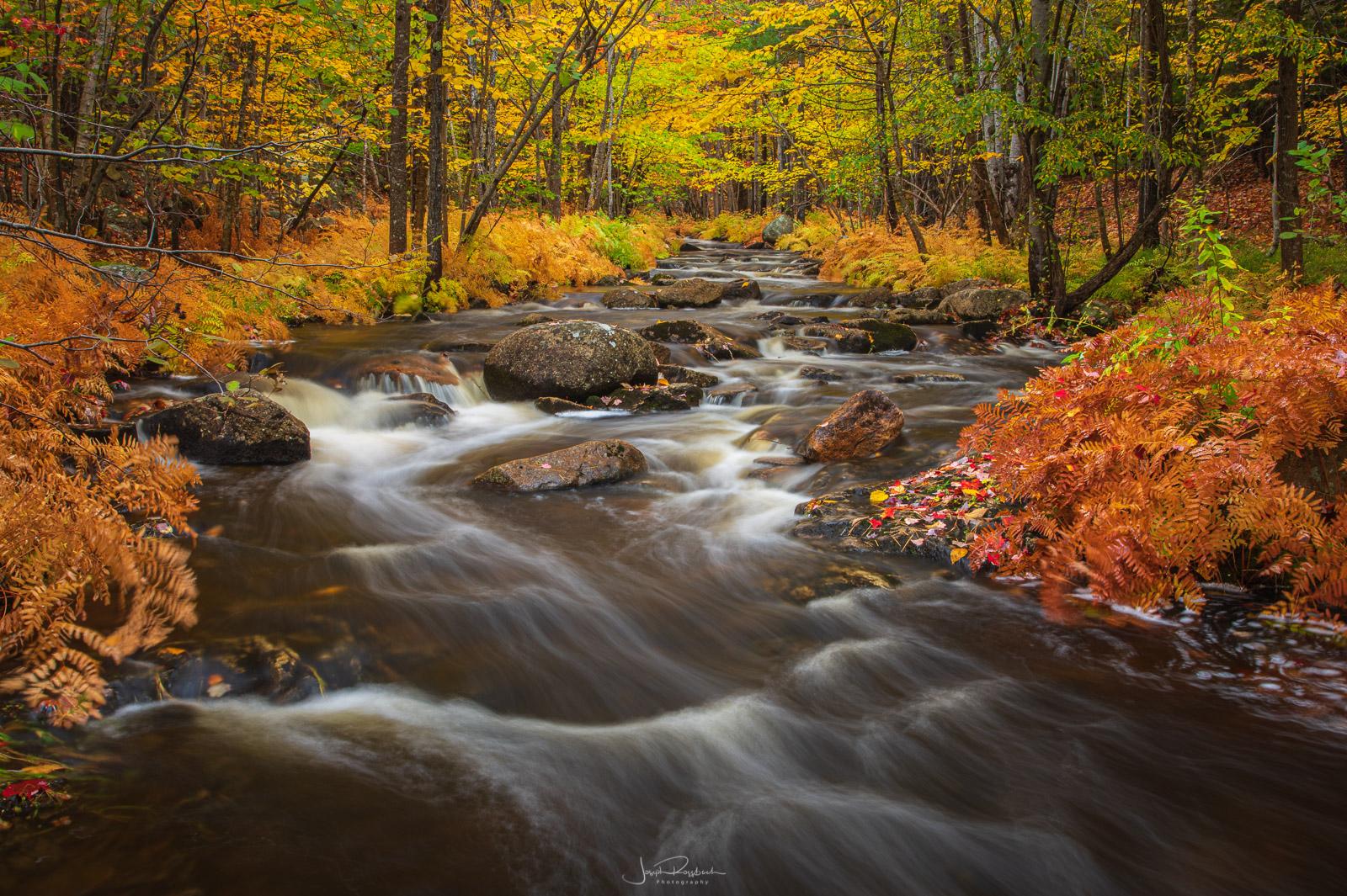 Autumn along Duck Brook.