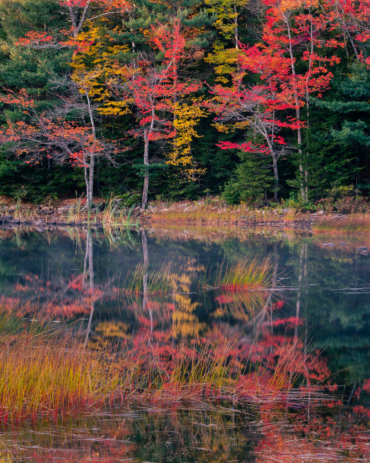 Autumn reflections and marsh grass on Eagle Lake, Acadia National Park, Maine