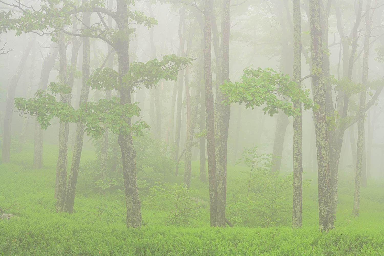Shenandoah National Park Fine Art Prints for sale.