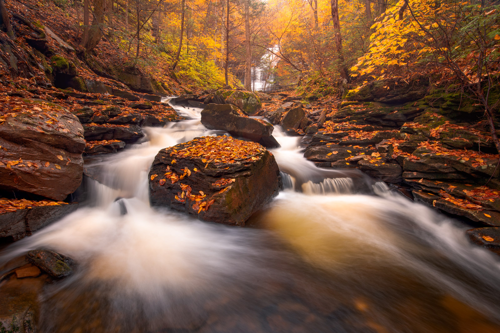 Autumn color below Ganoga Falls, the tallest waterfall at 94 feet, in Ricketts Glen State Park.