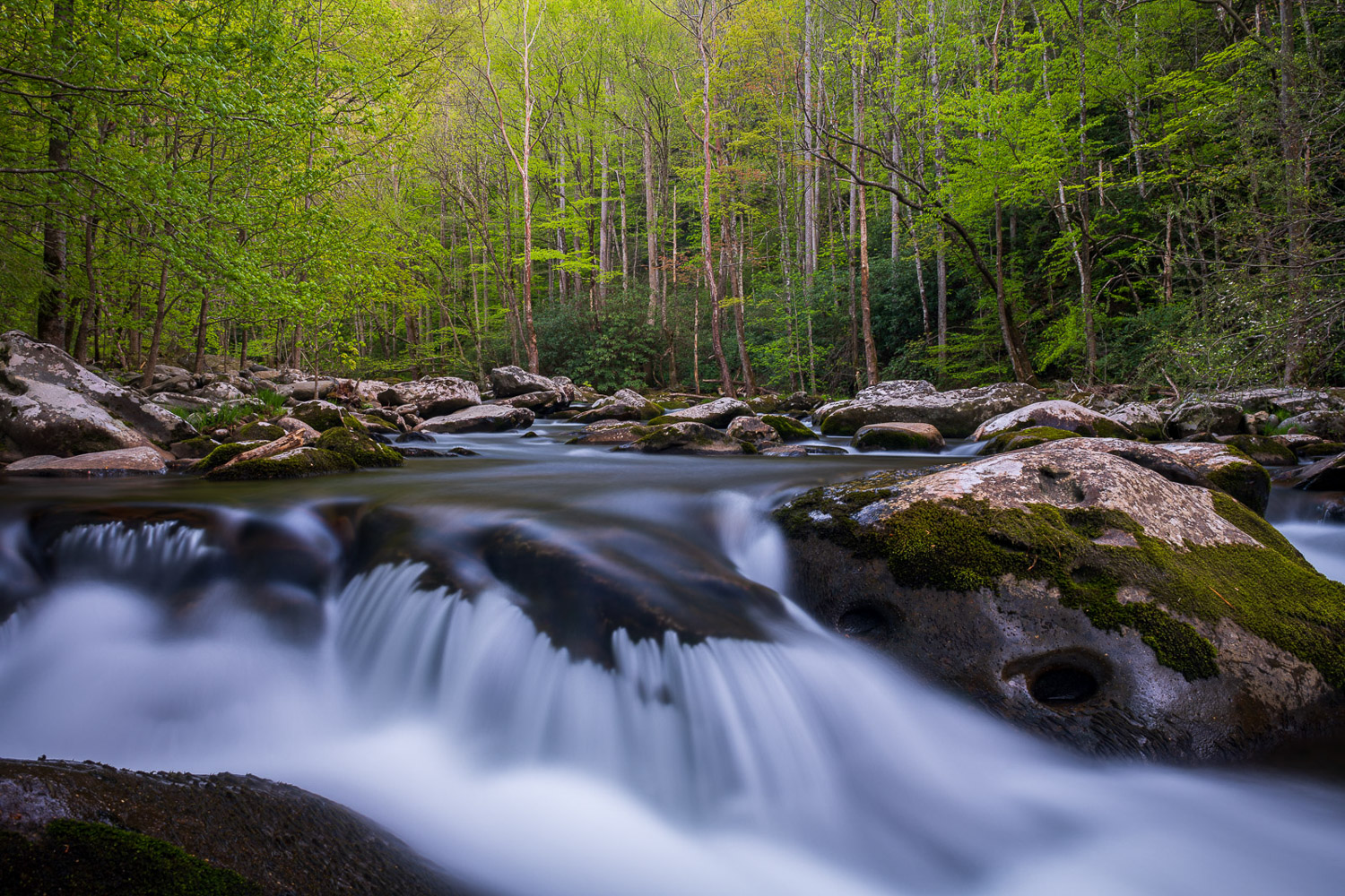 Cascade and spring foliage along the Middle Prong in Tremont.