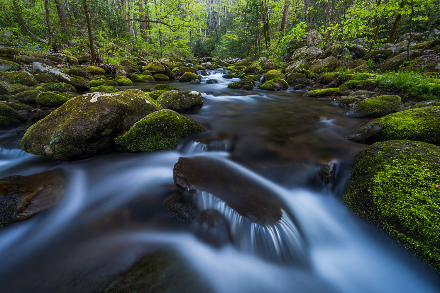 Moss covered boulders and spring foliage along the Roaring Fork River.