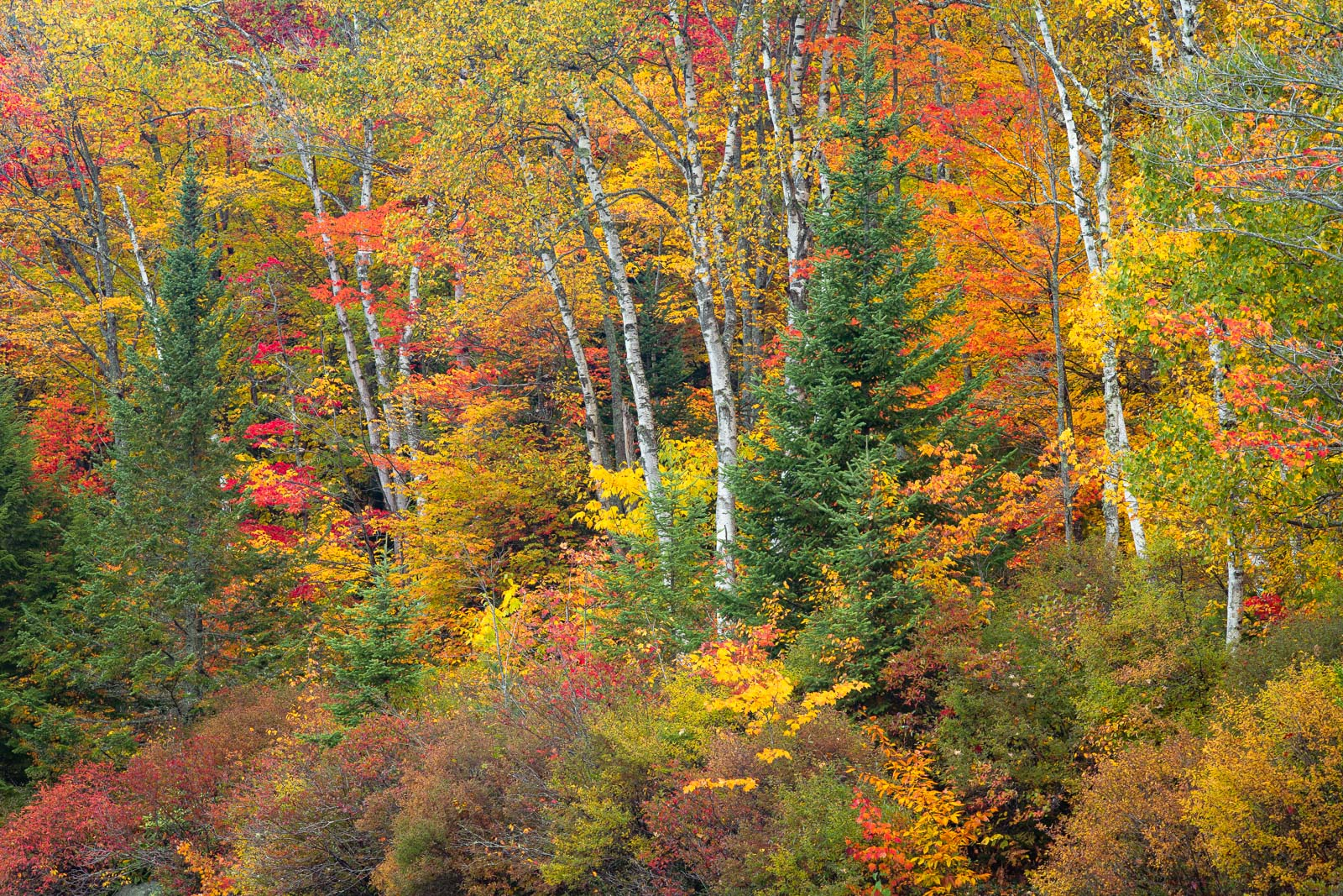 Autumn color in the Northern Vermont.