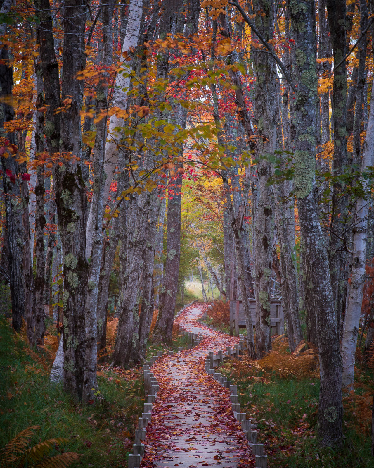 The jessup Path winds through the woodlands of Sieur de Monts in Acadia National PArk.