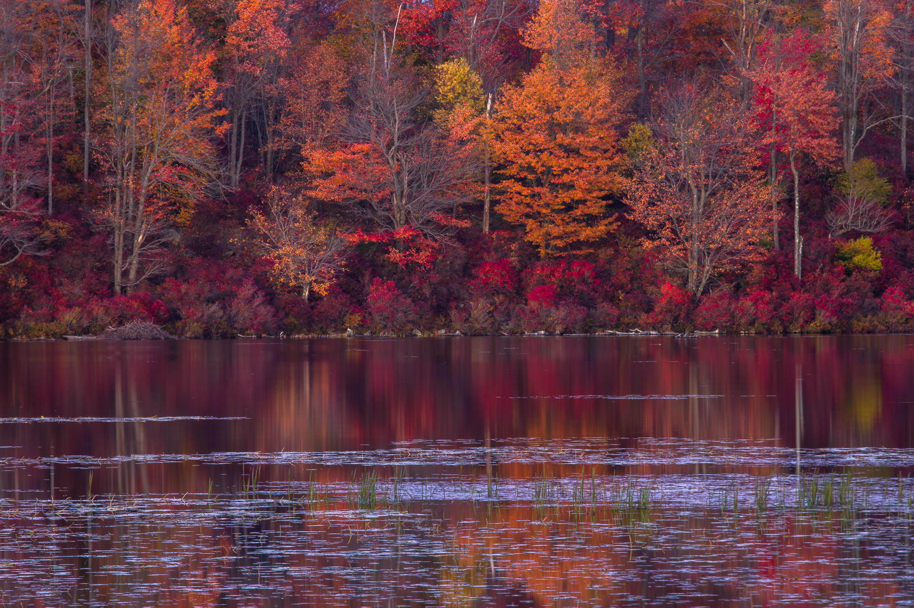 Fiery autumn reflection on Lake Jean in Ricketts Glen State Park captured at twilight. Pennsylvania.
