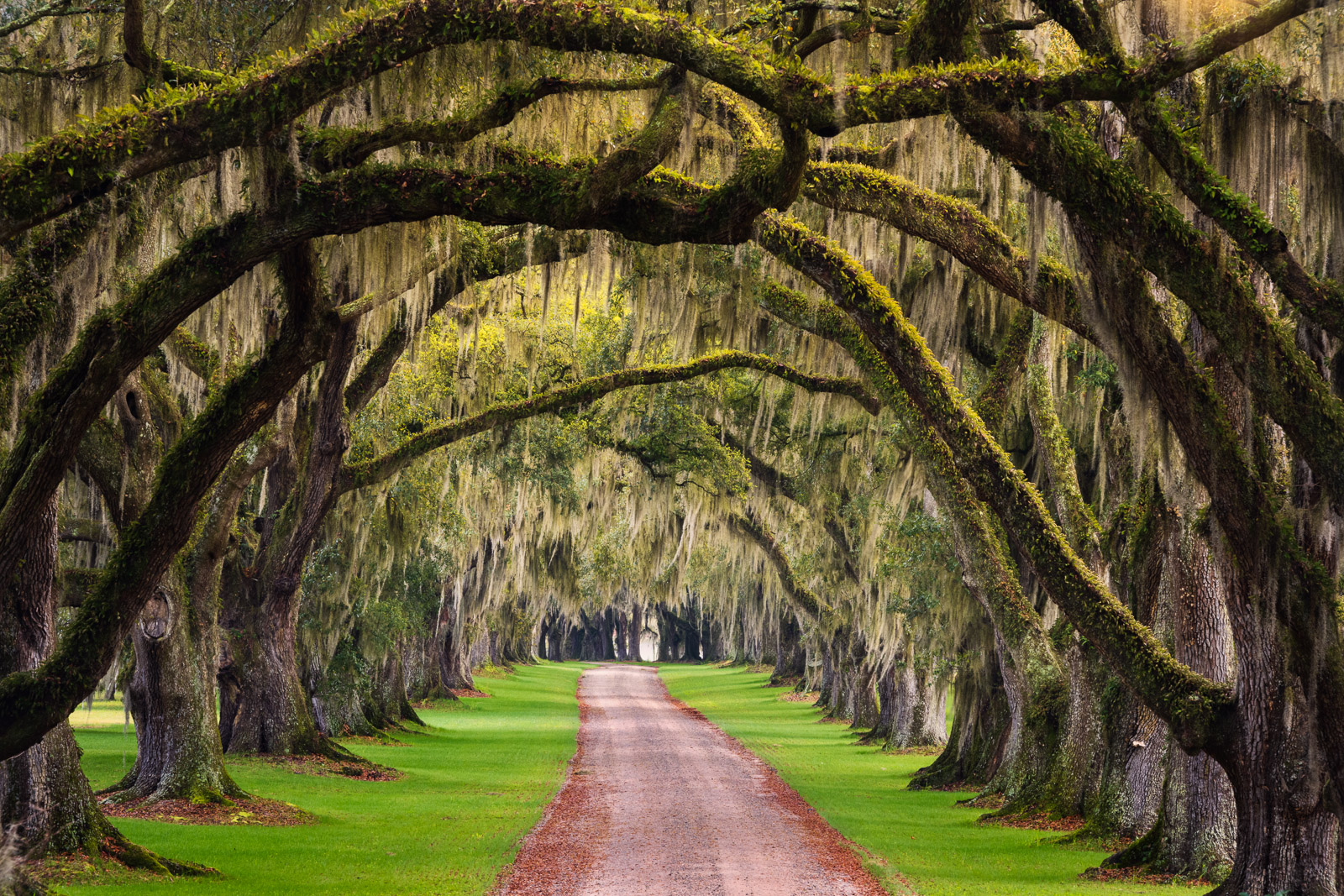 Live Oaks line the drivaway of this historic plantation in Beaufort County, South Carolina.