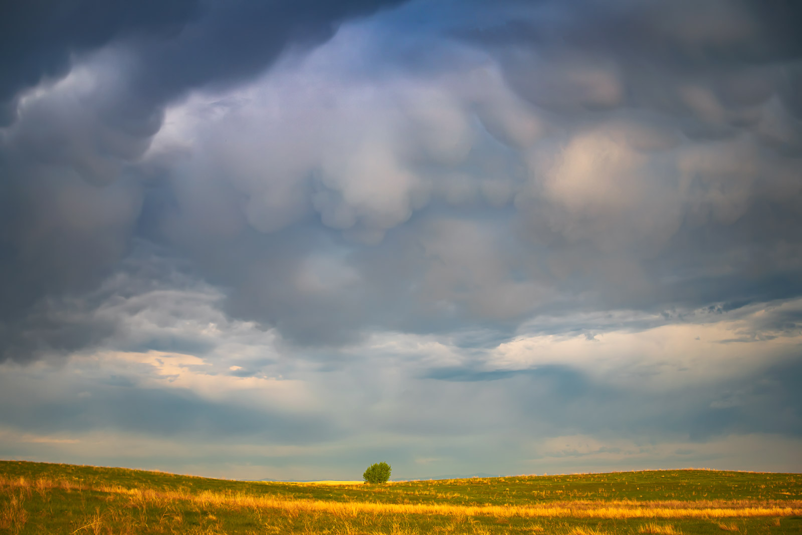 A lone tree on the Prairie under a brewing thunderstorm captured just before the skies opened up in rain, wind and sleet.