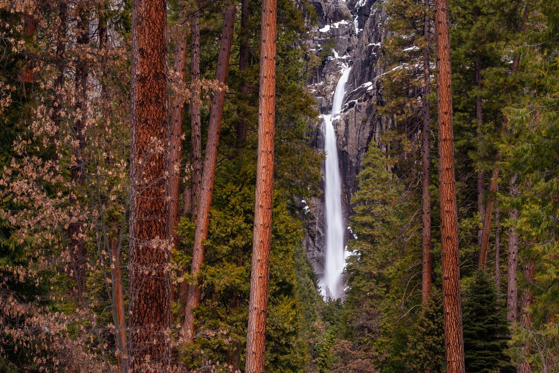 Ponerosa Pines frame Lower Yosemite Falls, Yosemite National Park, California