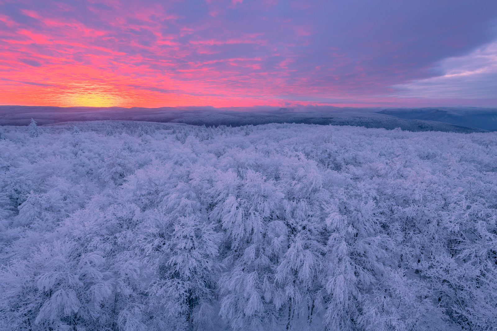Winter sunrise over Hoar Frost Covered trees in the Monongahela National Forest, West Virginia
