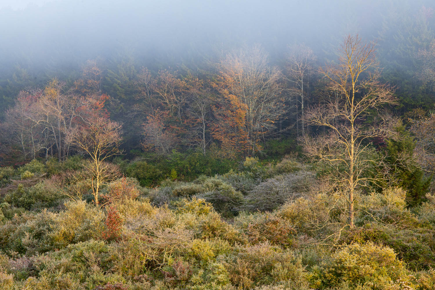 Foggy forest surrounding Spruce Knob Lake in the Monongahela National Forest of West Virginia.