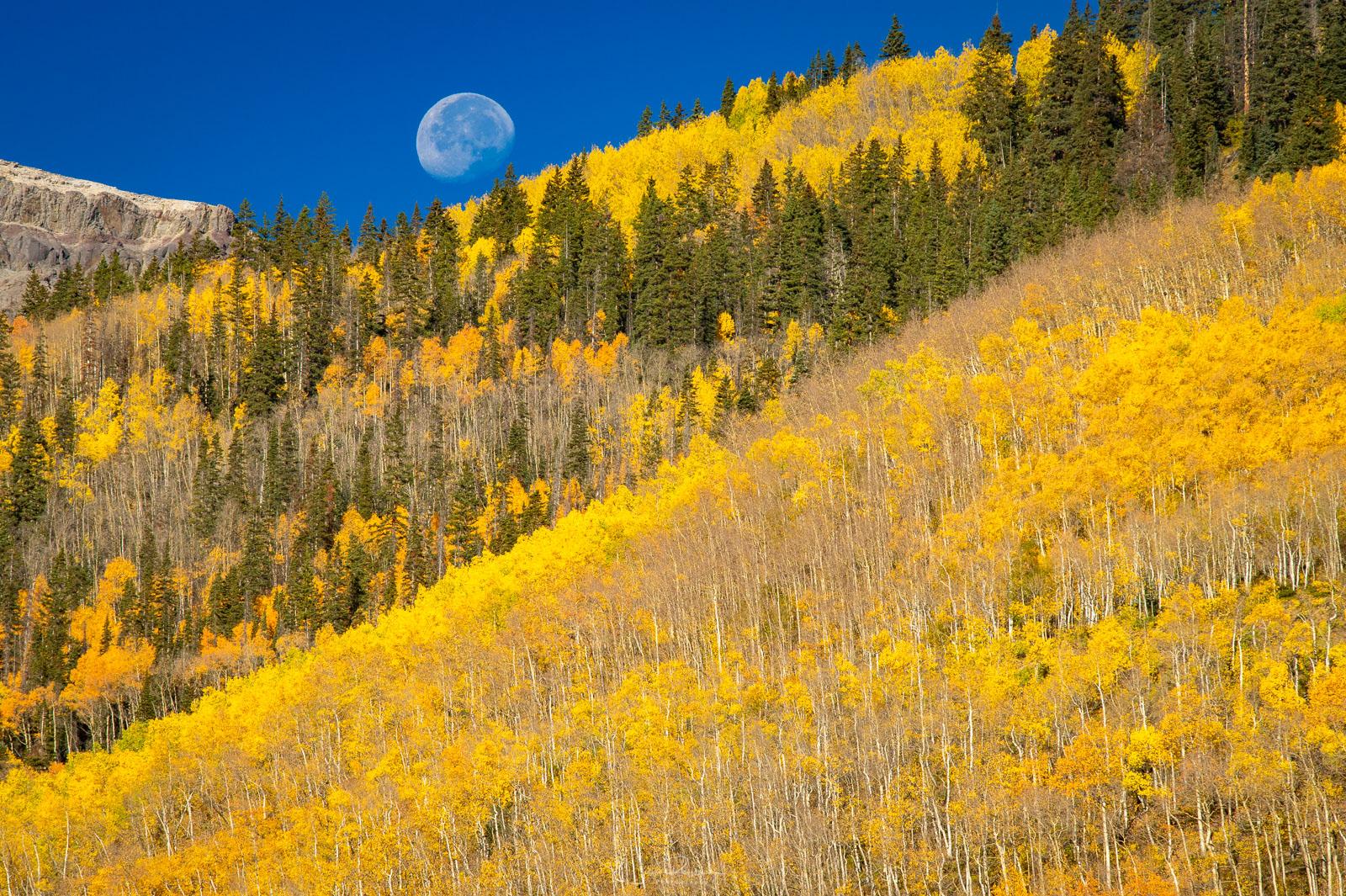 Moonset over aspen covered hillsides.