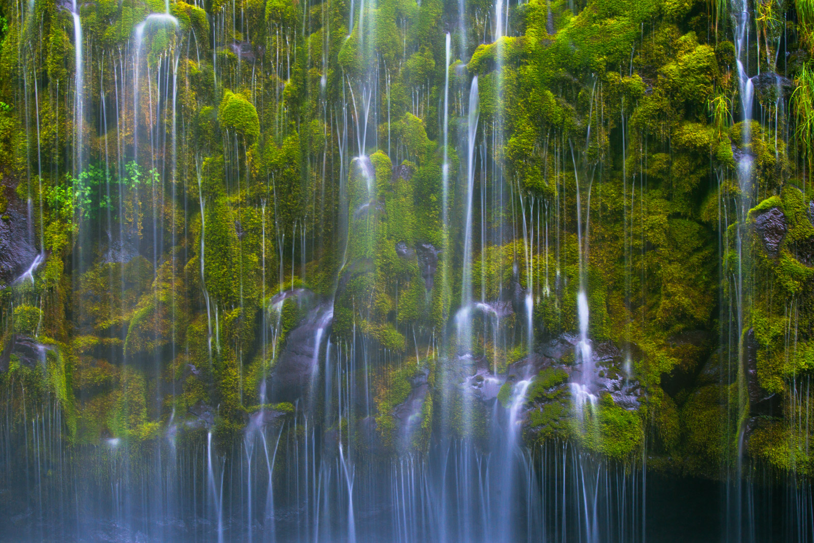 A close up section of moss and water falling in delicate patterns over Mossbrae Falls.