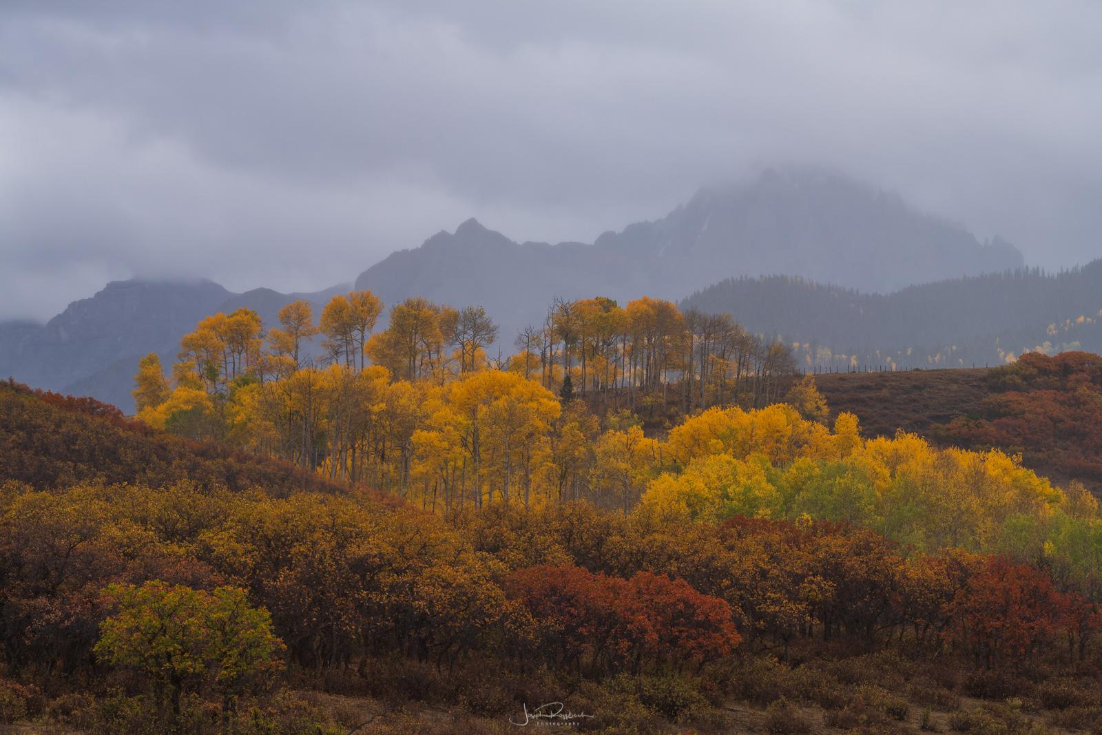 A storm and autumn aspens below Mount Sneffels.