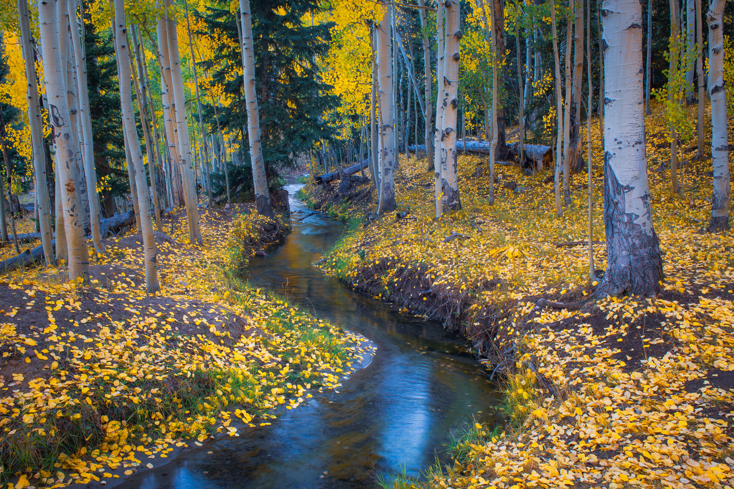 Limited Edition of 50 Autumn is arguably my favorite time of the year to be out in nature capturing new photographs. The changing...