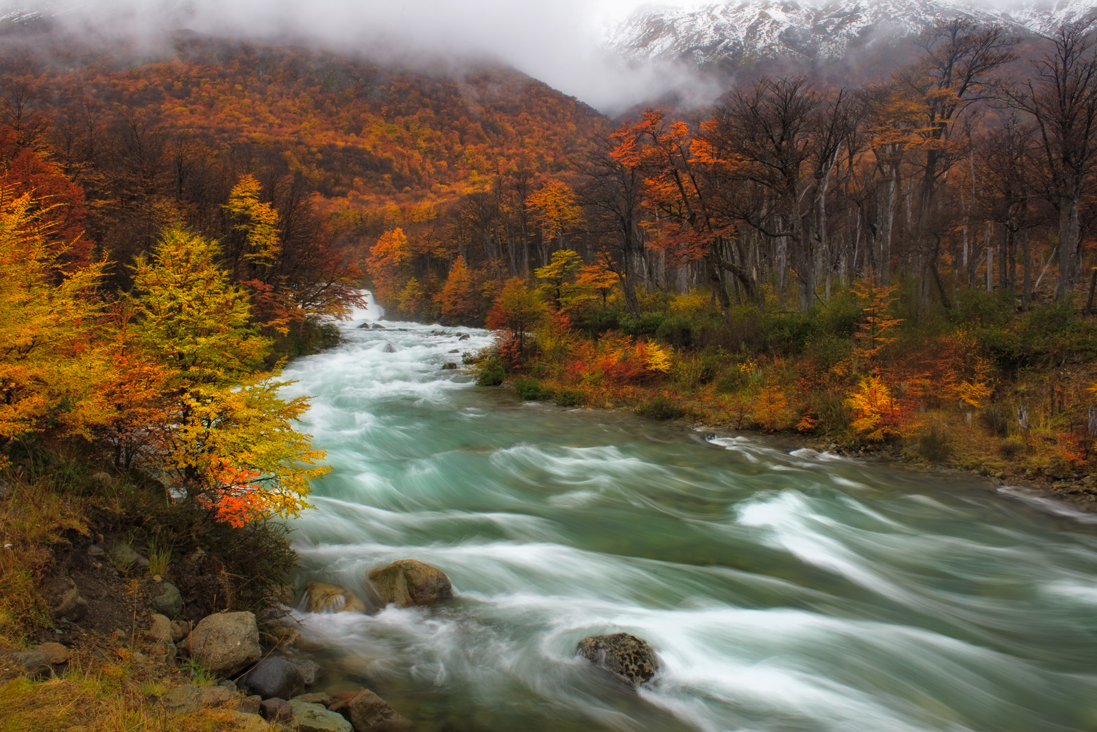 Limited Edition of 50 River running through a lush Lenga Forest in the Patagonia region of Argentina.