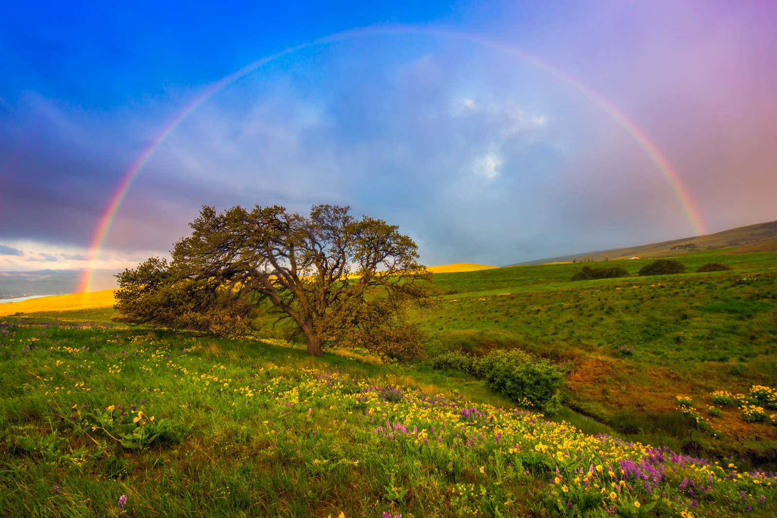 Rainbow arcing over Dalles Mountain Ranch with spring wildflowers. Available Print Sizes: 12x18, 16x24, 20x30, 24x36, 30x45...