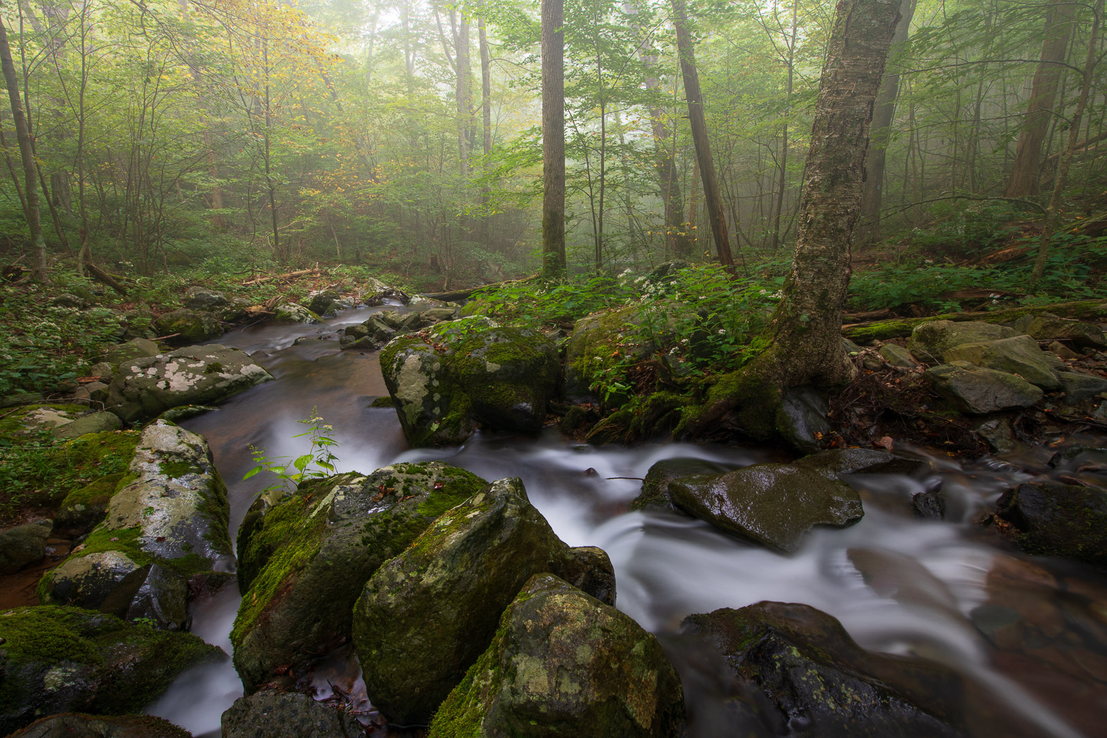 Early autumn and morning fog along the Rose River in the Backcountry of Shenandoah.