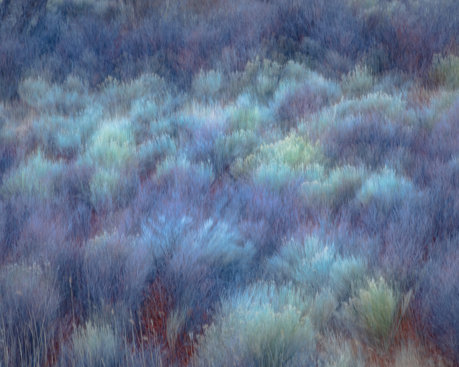 Sage & Rabbit Brush abstraction in the Owens Valley, California.