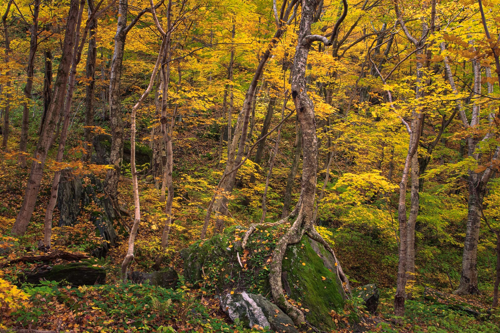 Autumn forest in Smugglers Notch, Mount Mansfield, Vermont.