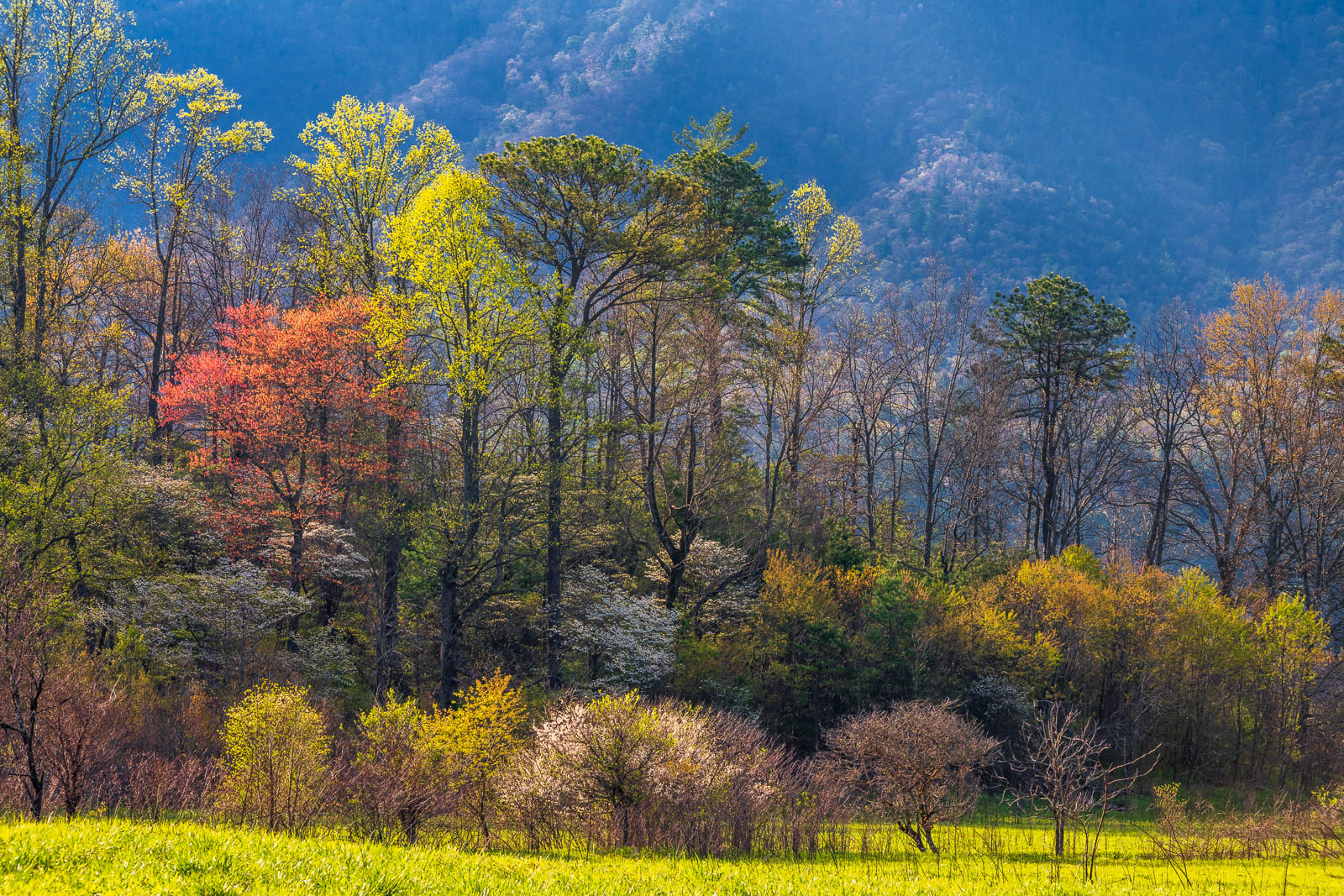 Spring foliage in Cades Cove.