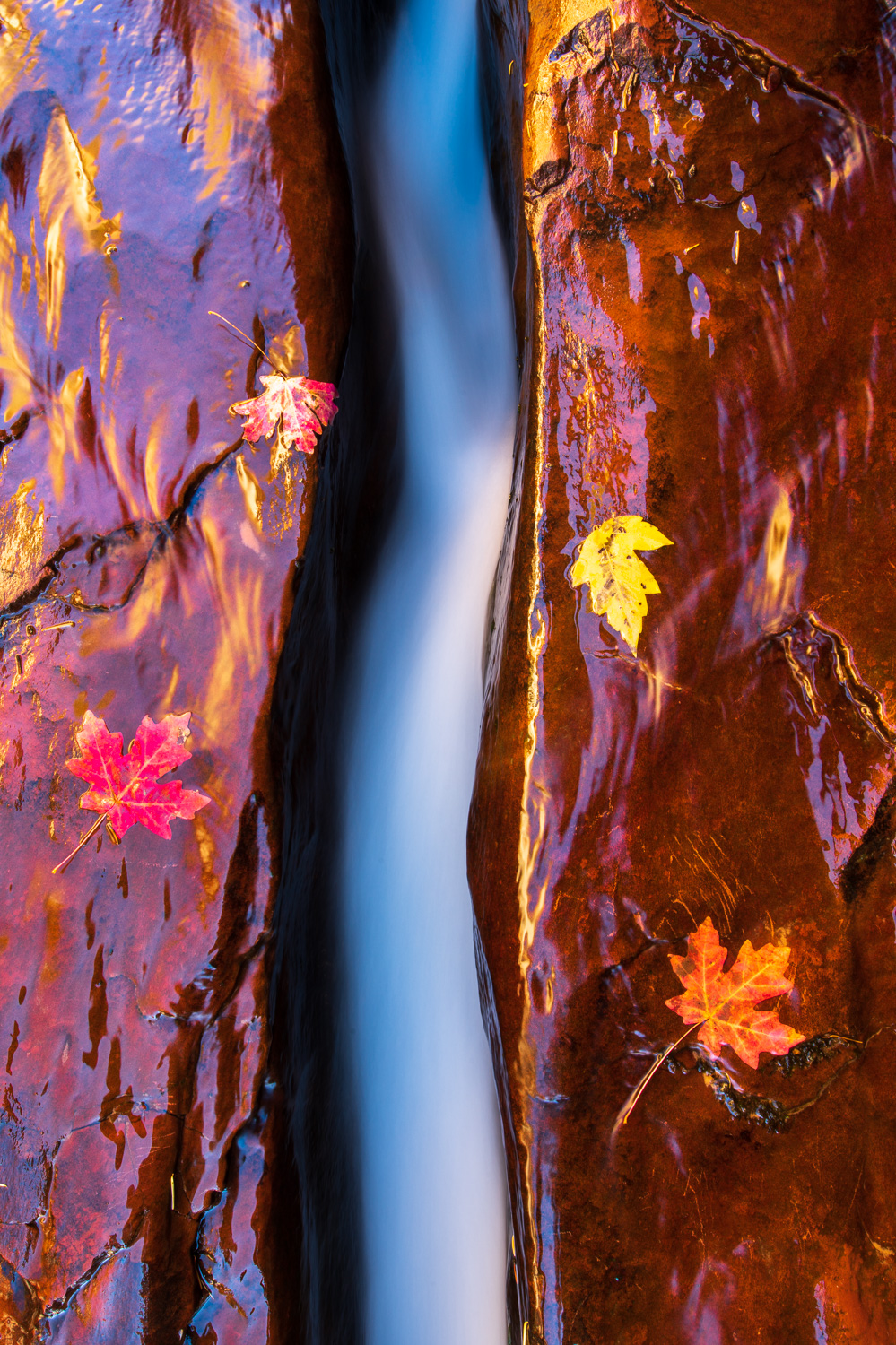 A water channel cuts through the sandstone near the Subway Slot Canyon deep in the backcountry of Zion National Park.