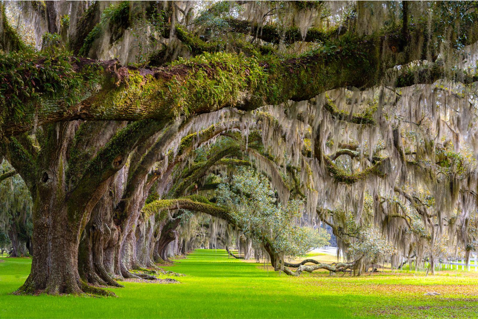 Charleston, Landscape, Plantations, South Carolina, art, beaufort, beautiful, colorful, county, design, fine art, for sale, lane...