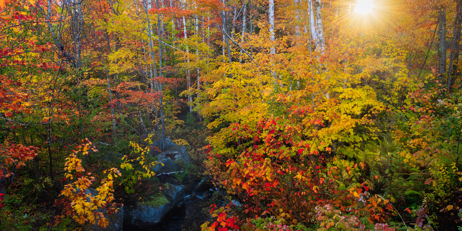 Autumn color in Vermont's Groton State Forest.