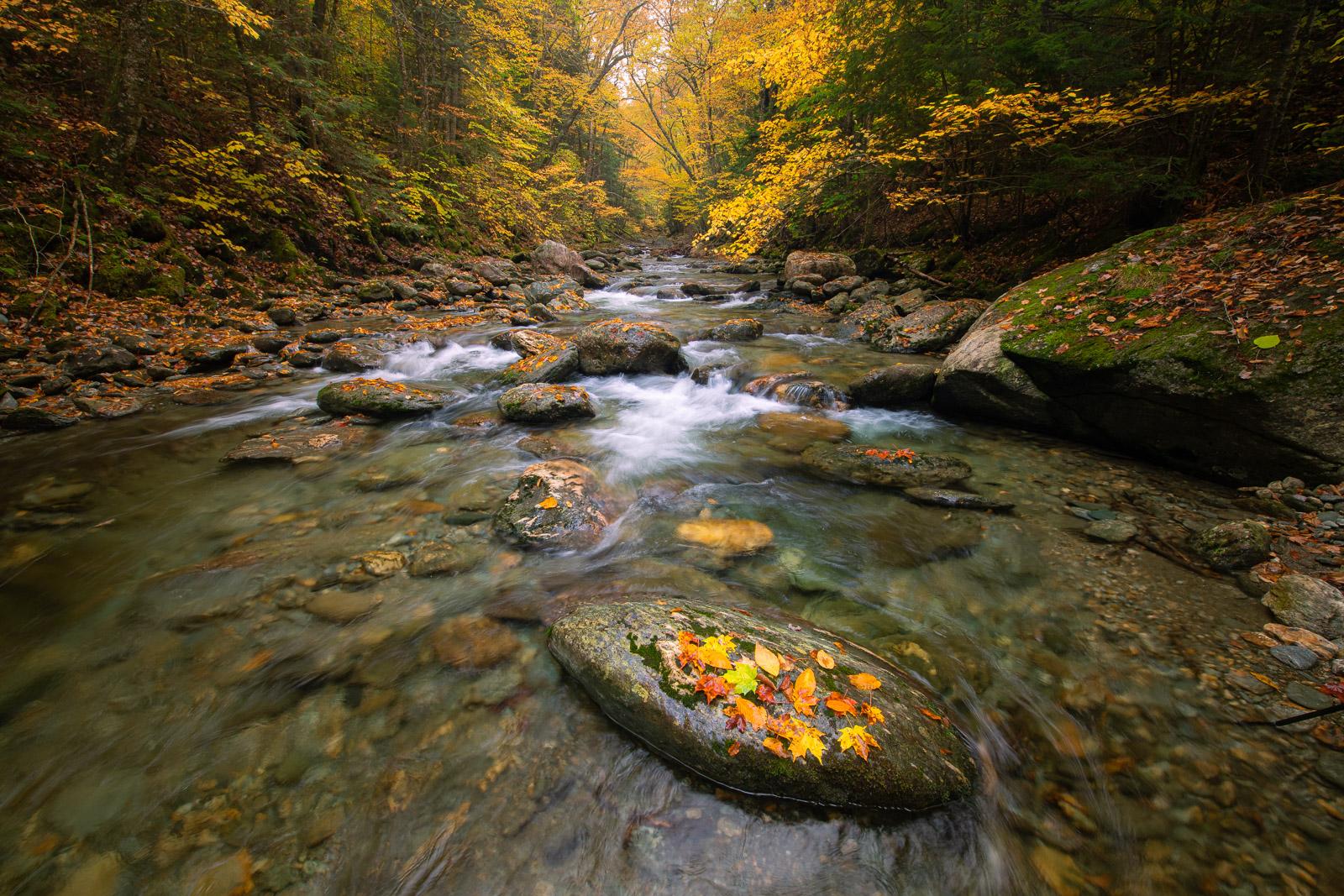 Autumn color along a pristine mountain stream.