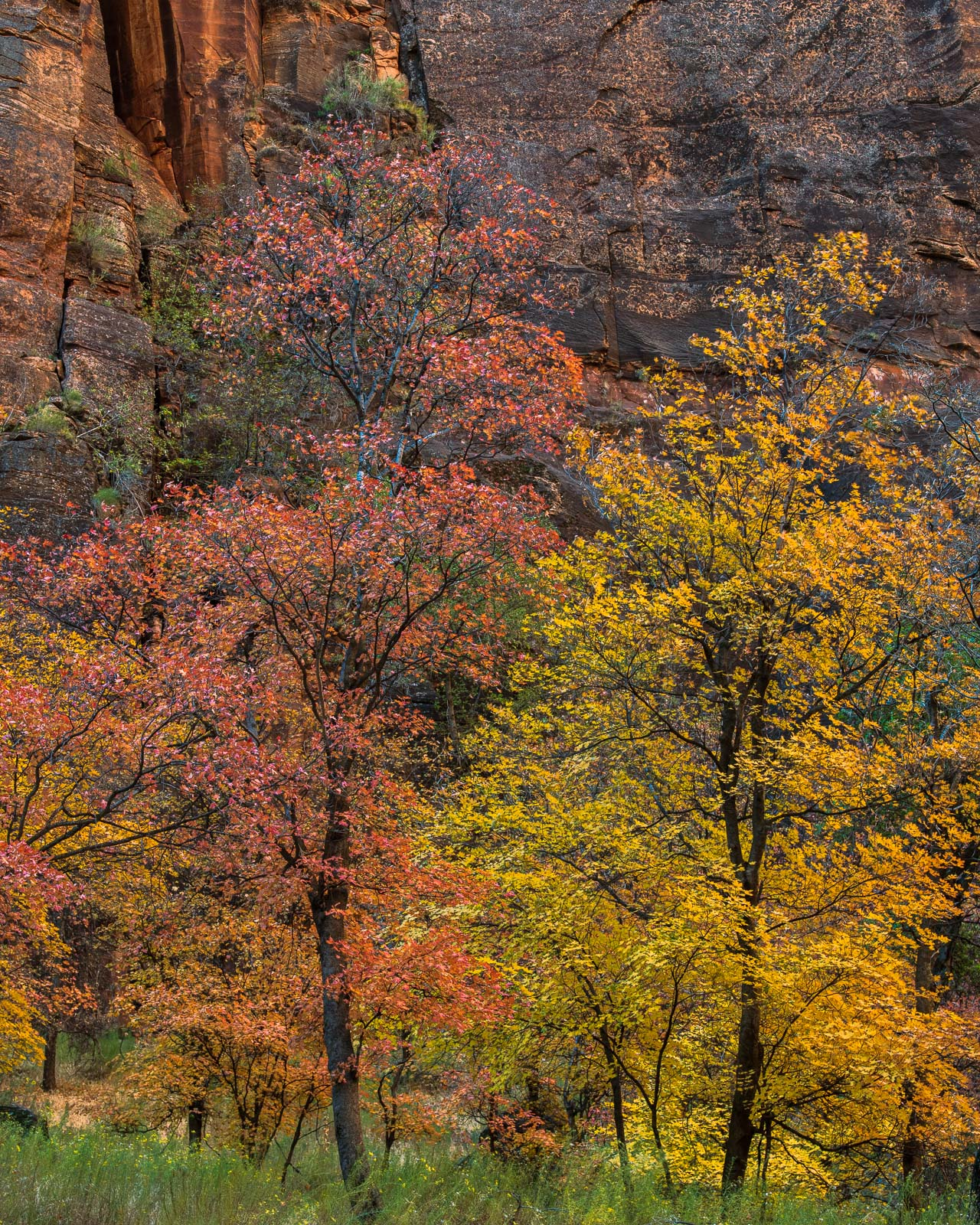 Autumn colors and canyon walls at the Temple of Sinawava.