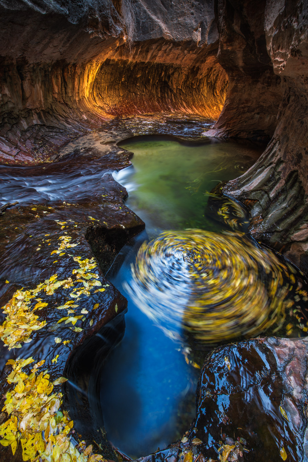 Swirling autumn leaves in the Subway slot canyon, Zion National Park, Utah.